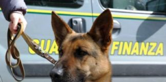 Cani antidroga, Guardia di finanza