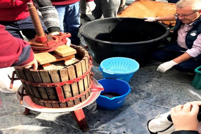 Uva, vino, tradizioni Calabria (foto di Luigi Salsini)