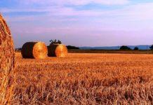 Agricoltura Calabria Catanzaro