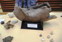 Museo della scienza Sellia