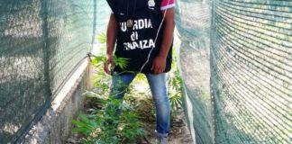 droga in giardino