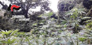 piantagione