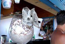 Dadada Beach Museum 640x427