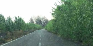 foto di un tratto invaso dalla vegetazione della SP 10-min