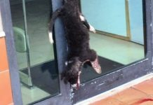 cane ucciso a Vibo Valentia