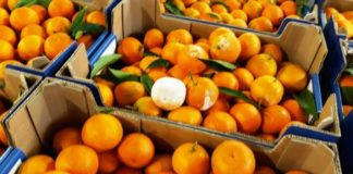 clementine, clima instabile