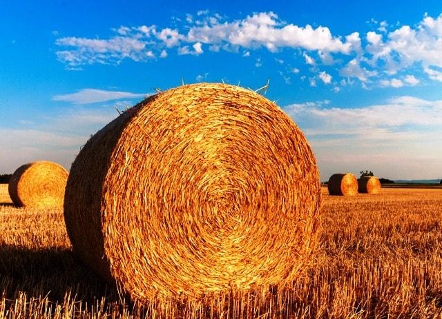 agricoltura Calabria