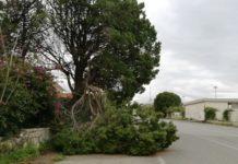 Cade ramo su strada principale