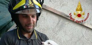 Vigili del fuoco salvataggio cane