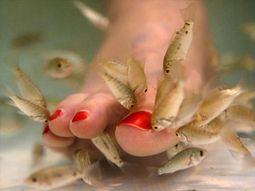 pesce in mare incontri