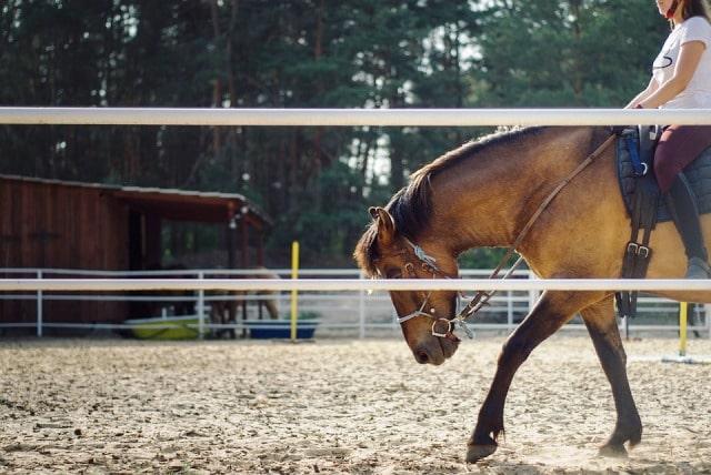 Valle dei mulini, equitazione, cavalli