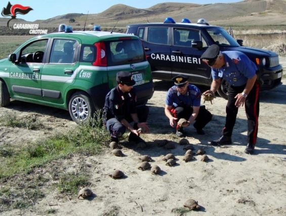 Carabinieri di Crotone 47 testuggini specie protetta
