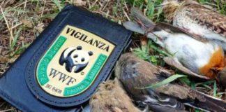 caccia-uccelli-protetti