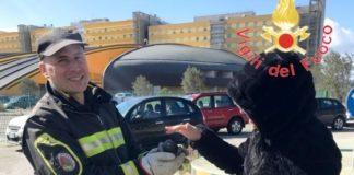 vigili del fuoco salvataggio volatile