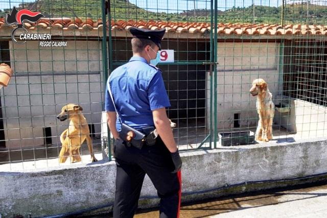 Carabinieri canile irregolare sequestro