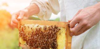 giornata mondiale api, Coldiretti Calabria