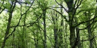 patrimonio forestale