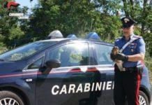 Carabinieri Crotone rapace ferito