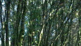 aree forestali