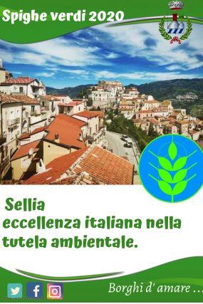 Sellia Spighe Verdi (1)