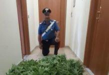 arresto per spaccio di sostanze stupefacenti Carabinieri Catanzaro