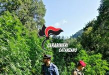 Carabinieri Catanzaro piantagione canapa