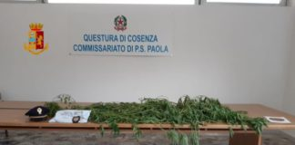 Paola, sequestro marijuana