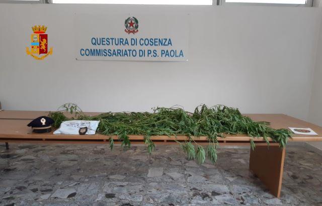 Paola, sequestro marijuana