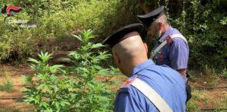 Sequestro piantagione marijuana Carabinieri Reggio Calabria