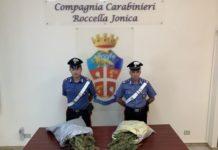 Canapa, Carabinieri Reggio Calabria