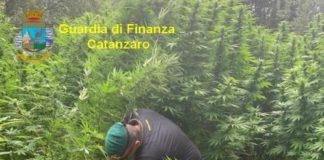 Piantagione Canapa, Guardia di Finanza Catanzaro