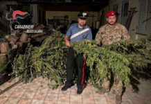 marijuana, Carabinieri Reggio Calabria