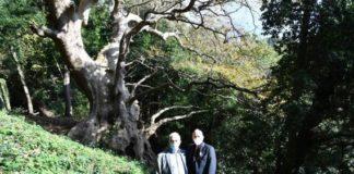 Calabria, albero dell'anno