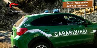Reggio Calabria, Carabinieri Forestali