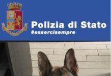 Catanzaro, arresto per droga, il cane poliziotto BRUCE