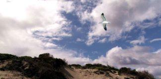 dune Giovino, Catanzaro Lido (fonte Fame di Sud)