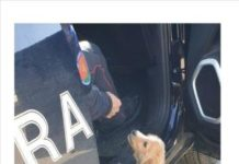 Cucciolo abbandonato, Carabinieri Vibo Valentia