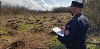 Melicuccà, 5 arresti carabinieri forestali Reggio Calabria