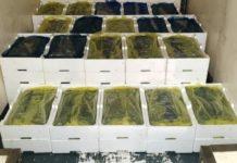 Crotone sequestrata quasi mezza tonnellata di novellame