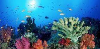 ecosistemi marini