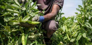 lavoratore agricolo