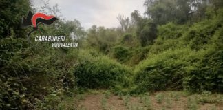 Dasà, rinvenuta piantagione canapa, Carabinieri Vibo Valentia