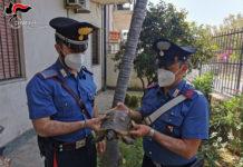 Gallico, tartaruga messa in salvo, Carabinieri Reggio Calabria