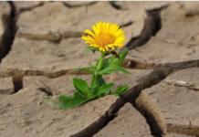 Giornata della Desertificazione