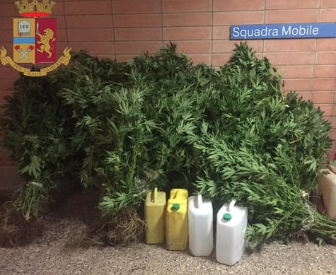 Catanzaro piantagione marijuana