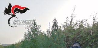Crotone, coltivazione marijuana, Carabinieri Crotone