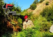Grotteria (RC) piantagione canapa indiana, Carabinieri Reggio Calabria