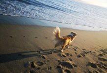 cane, spiaggia