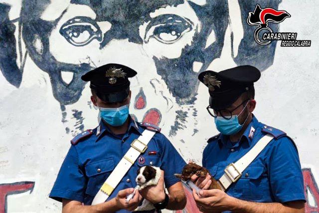 Abbandono animali, salvati sette cuccioli, Carabinieri Regio Calabria