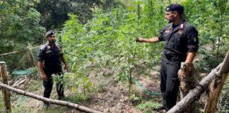 Cetraro, operazione antidroga Carabinieri